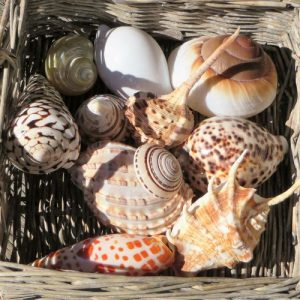 Seashell Mix