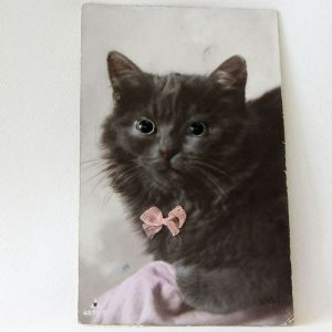 Postcard - Cat facing front with glass eyes