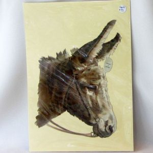 Scrap – Donkey Portrait